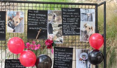 Animalia conmemora a los animales fallecidos del campus Peñalolén